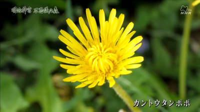 m_jingu (24).jpg